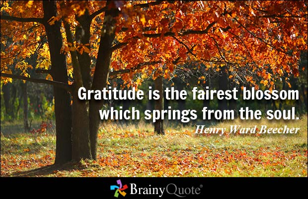 brainy quote gratitude is the fairest blossom which springs from